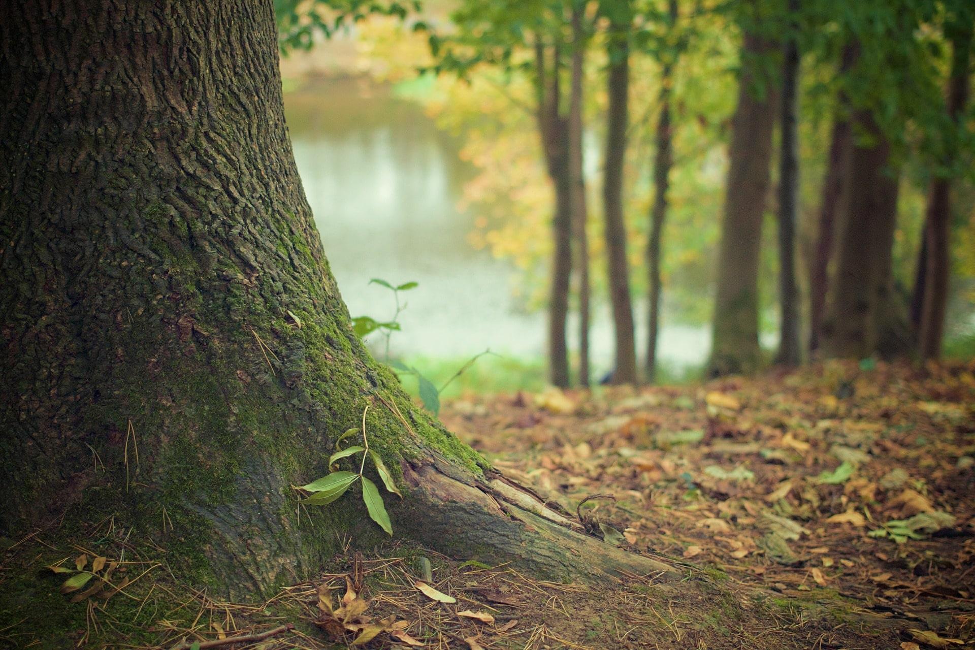 paysage arbre foret apaisant