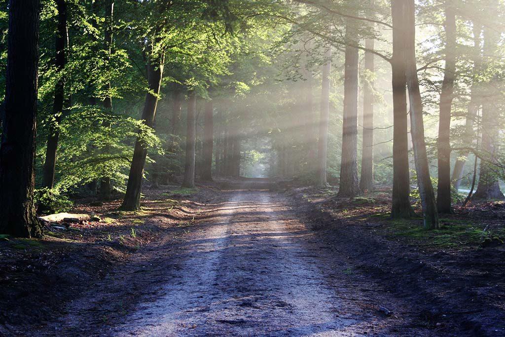 chemin de foret calme détente